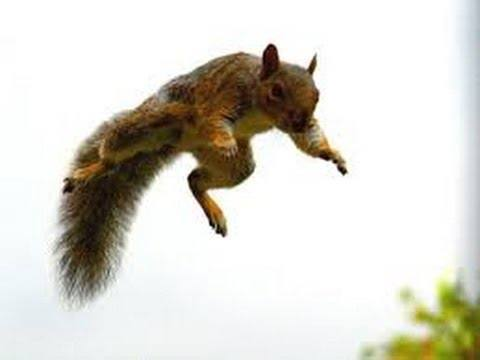 How High Can A Squirrel Jump Off The Ground