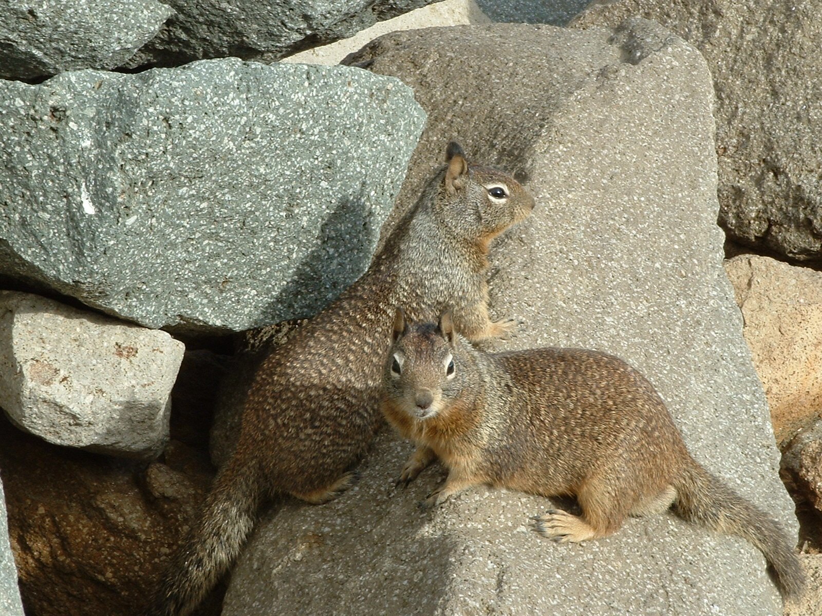 How to Attract Squirrels How to Attract Squirrels new pictures