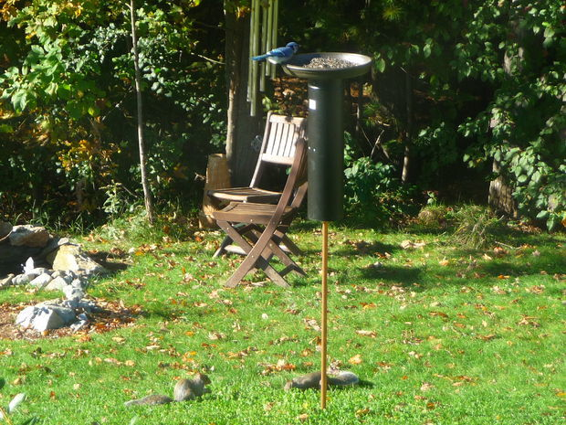 squirrel proof birdfeeder