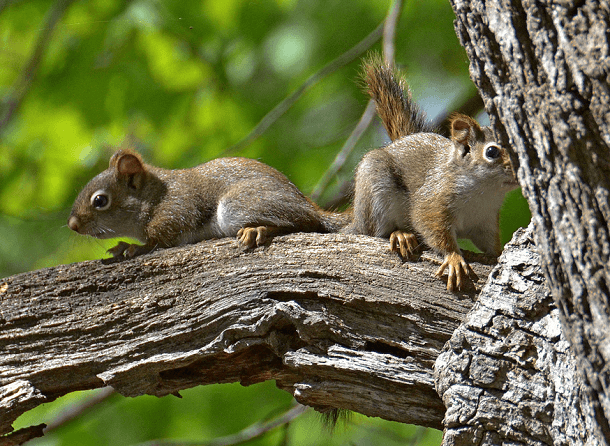 two baby squirrels