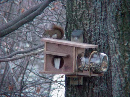 nesting and feeding house for squirrels