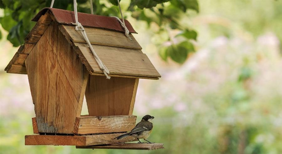 Best Backyard Wooden Bird Feeders