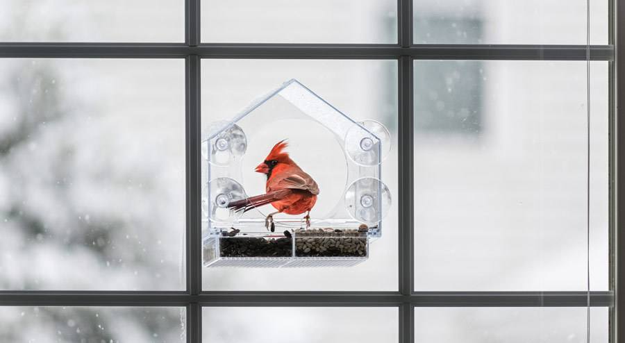 The 5 Best Window Bird Feeder