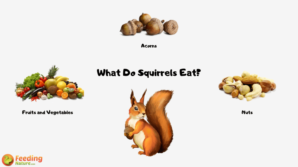 What Do Squirrels Eat