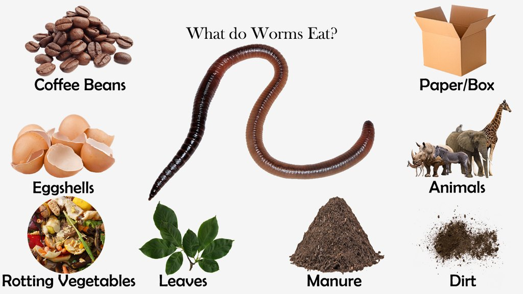 What do Worms Eat?